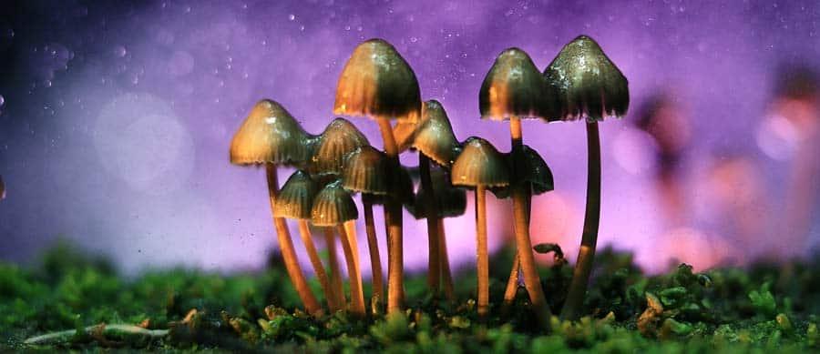 healing with psilocybin mushrooms